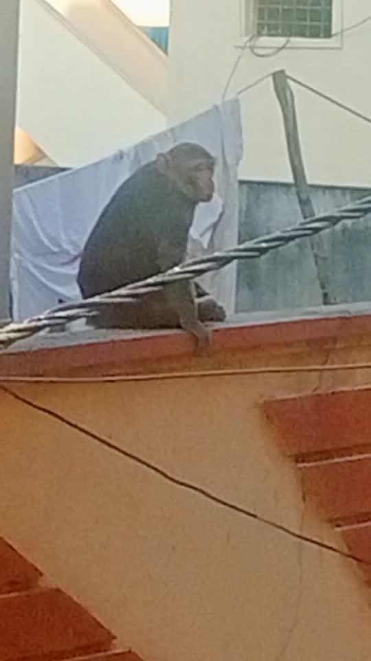 #monkey