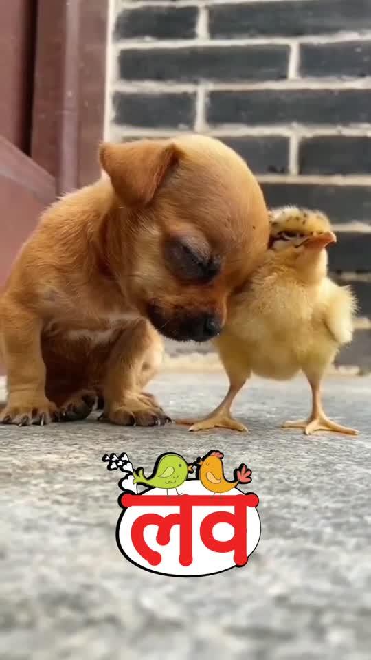 #animalworld#animallove#