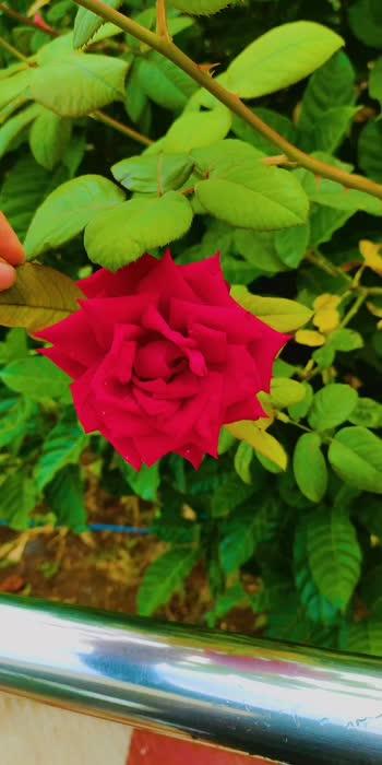 #naturelover #naturepgotography #flowerslovers #marathimulgi #marathiroposo #love-status-roposo-beats #kiaraadvani #rashmikamandanna #roposostars #sypportme #like4like